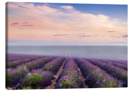 Canvas print  Landscape: lavender field in summer at sunrise, Provence, France - Matteo Colombo