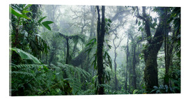 Acrylic glass  Misty Rainforest, Costa Rica - Matteo Colombo