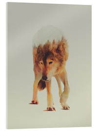 Acrylic print  Wolf in the Woods - Andreas Lie