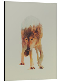 Aluminium print  Wolf in the Woods - Andreas Lie