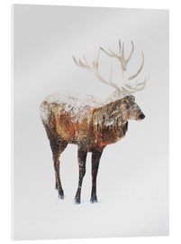Acrylic glass  Arctic Deer - Andreas Lie