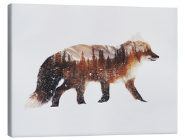 Canvas  Arctic Red Fox - Andreas Lie