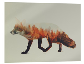 Acrylic print  Norwegian woods, The Fox - Andreas Lie