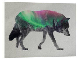 Acrylic print  Wolf in Aurora Borealis - Andreas Lie