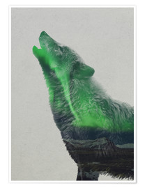 Premium poster  Howling in the Aurora Borealis - Andreas Lie