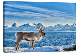 Canvas  Reindeer in snow covered landscape at sea - Jürgen Ritterbach