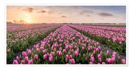 Premium poster tulips fields holland