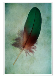 Premium poster Green feather