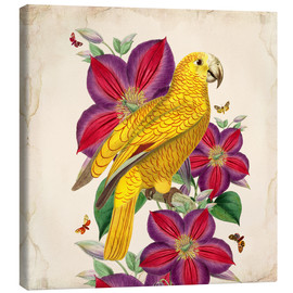 Canvas print  Oh My Parrot V - Mandy Reinmuth