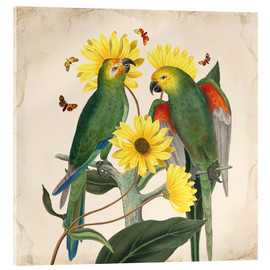 Acrylic glass  Oh My Parrot II - Mandy Reinmuth