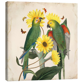 Canvas print  Oh my parrot II - Mandy Reinmuth