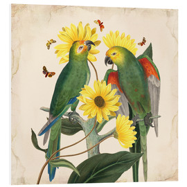 Foam board print  Oh my parrot II - Mandy Reinmuth