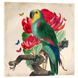 Acrylic print  Oh My Parrot X - Mandy Reinmuth
