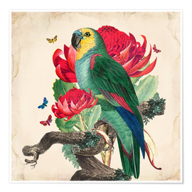 Premium poster  Oh My Parrot X - Mandy Reinmuth