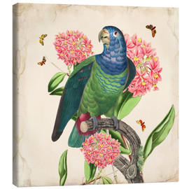 Canvas  OhMyParrot IV - Mandy Reinmuth