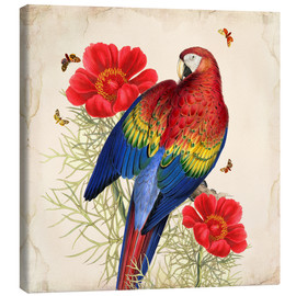 Canvas print  Oh My Parrot III - Mandy Reinmuth
