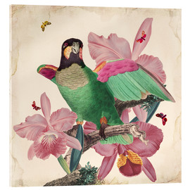 Acrylic glass  Oh My Parrot VIII - Mandy Reinmuth