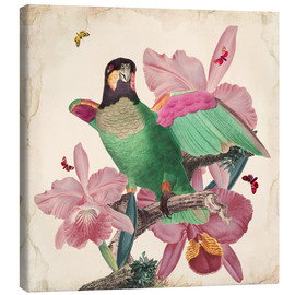 Canvas print  Oh my parrot VIII - Mandy Reinmuth