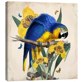 Canvas print  Oh My Parrot IX - Mandy Reinmuth