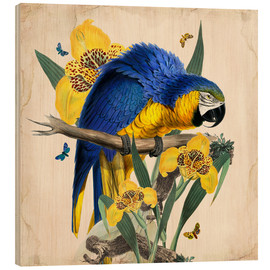 Wood print  Oh My Parrot IX - Mandy Reinmuth