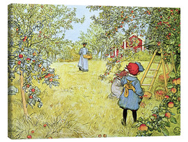 Canvas  The Apple Harvest - Carl Larsson