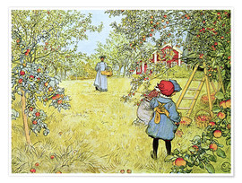 Premium poster  The Apple Harvest - Carl Larsson