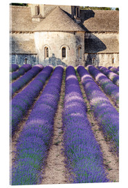 Acrylic print  Lavender field and famous Senanque abbey in Provence, France - Matteo Colombo