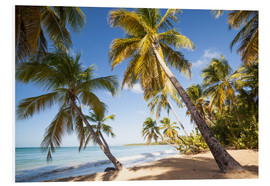 Foam board print  Palm trees and sandy beach in the caribbean, Martinique, France - Matteo Colombo