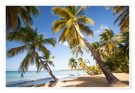 Premium poster  Palm trees and sandy beach in the caribbean, Martinique, France - Matteo Colombo