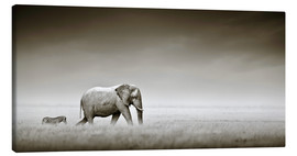 Canvas  Elephant walking past zebra size comparison - Johan Swanepoel