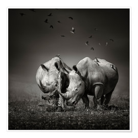 Premium poster  Two Rhinoceros with Birds - Johan Swanepoel