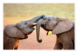 Premium poster Two elephants interact gently with trunks