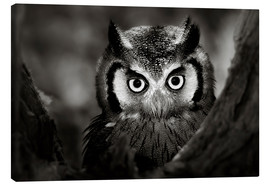 Canvas print  White-faced Owl perched in a tree - Johan Swanepoel