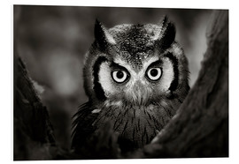 Foam board print  White-faced Owl perched in a tree - Johan Swanepoel