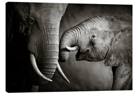 Canvas  Baby elephant interacting with Mother - Johan Swanepoel