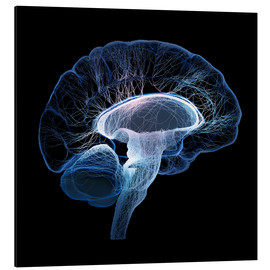 Aluminium print  Human Brain illustrated with network of nerves - Johan Swanepoel