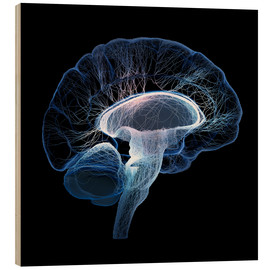 Wood  Human Brain illustrated with network of nerves - Johan Swanepoel