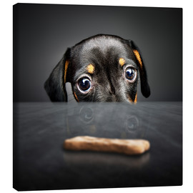 Canvas  Dachshund puppy looking at out of reach treat - Johan Swanepoel
