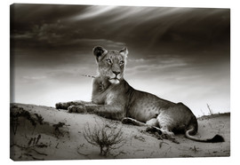 Canvas print  Lioness resting on top of a sand dune - Johan Swanepoel