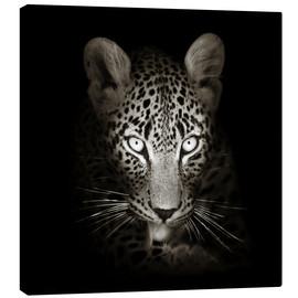 Canvas print  Leopard portrait licking it's paw - Johan Swanepoel
