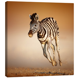 Canvas print  Zebra calf running in dusty Etosha desert - Johan Swanepoel