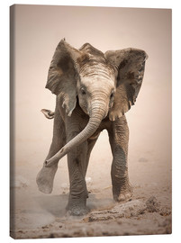 Canvas print  Little Elephant mock charging - Johan Swanepoel