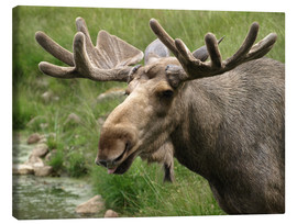 Canvas  Moose