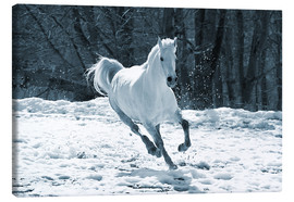 Canvas print  Gray mare in snow