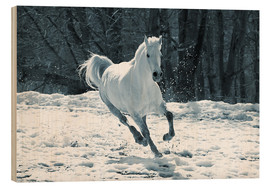 Wood  Gray mare in snow