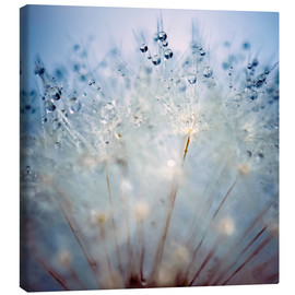 Canvas print  impaled drops
