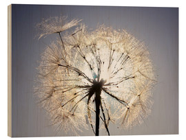 Wood print  Dandelion is ready to fly
