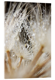 Acrylic print  caught dewdrops