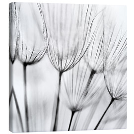 Canvas print  Black and white dandelion