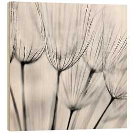Wood print  Black and white dandelion